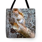 Red Squirrel Maine Tote Bag
