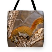 Red Squirrel Pictures 145 Tote Bag