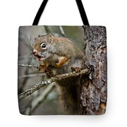 Red Squirrel Pictures 161 Tote Bag