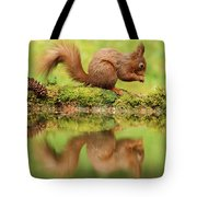 Red Squirrel Reflection Tote Bag