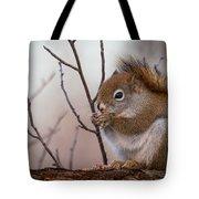 Red Squirrel - Sciurus Vulgaris Tote Bag
