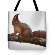 Red Squirrel Transparent Tote Bag