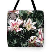 Red Stripe Tulips Tote Bag