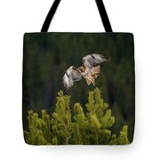 Red-tail Flight At Sunset Tote Bag
