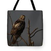 Red-tail Hawk 2 Tote Bag