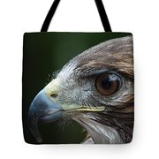 Red Tail Hawk Misted Tote Bag