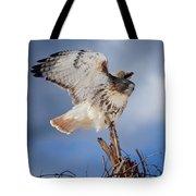 Red Tail Hawk Perch Tote Bag