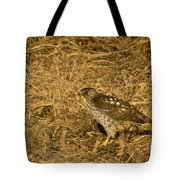 Red Tail Hawk Walking Tote Bag