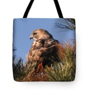 Red Tail In The Pines Tote Bag