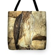 Red-tailed Hawk 5 Tote Bag