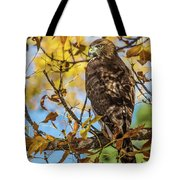 Red-tailed Hawk In Fall Color Tote Bag