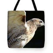 Red-tailed Hawk In Profile Tote Bag