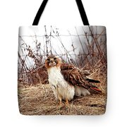 Red Tailed Hawk In The Field Tote Bag