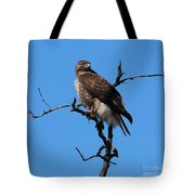 Red Tailed Hawk Tote Bag by Kathy DesJardins