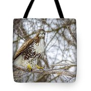 Red Tailed Hawk,  Tote Bag