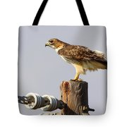 Red Tailed Hawk Perched Tote Bag