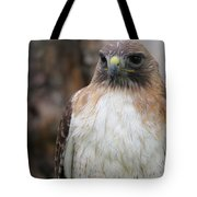 Red-tailed Hawks Tote Bag