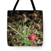 Red Thistle Morning Sunlight Tote Bag