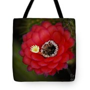 Red Torch Cactus-echinopsis  Tote Bag