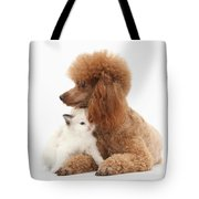 Red Toy Poodle And Kitten Tote Bag