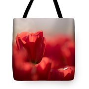 Red Tulips Tote Bag by Windy Corduroy