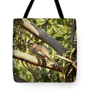Red Wattlebird Australia Tote Bag