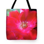 Red White Rose Tote Bag