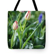 Red White Tulips Tote Bag
