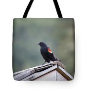 Male Red Wing Black Bird Tote Bag