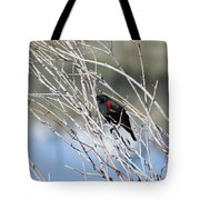 Red Winged Black Bird At Chatfield Tote Bag