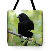 Red-winged Blackbird Tote Bag by Doris Potter