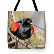 Red-winged Blackbird Foraging Tote Bag