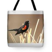 Red Winged Blackbird I I Tote Bag