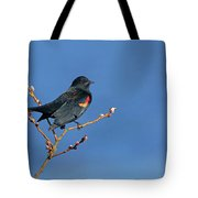 Red-winged Blackbird On Blue Tote Bag