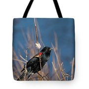 Red-winged Blackbird On Cattail  Tote Bag
