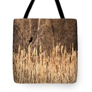 Red Winged Blackbird On Cattails Tote Bag