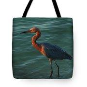 Reddish At Sunset Tote Bag