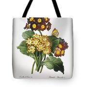 Redoute: Auricula, 1833 Tote Bag