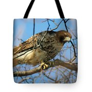 Redtail Among Branches Tote Bag