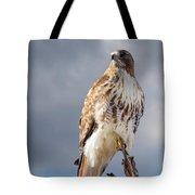 Redtail Portrait Tote Bag