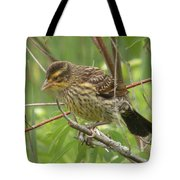 Redwing Blackbird - Immature Tote Bag
