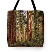 Redwood Forest Landscape Tote Bag