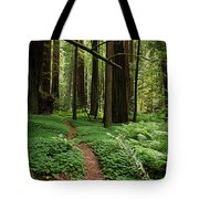 Redwood Forest Path Tote Bag