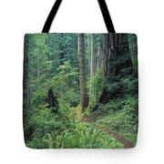 Redwood Park Trail Tote Bag