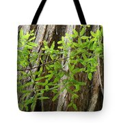 Redwood Tree Art Prints Baslee Troutman Tote Bag