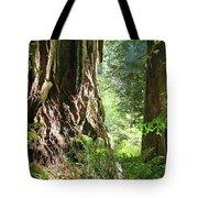 Redwood Tree Art Prints Redwoods Forest Tote Bag