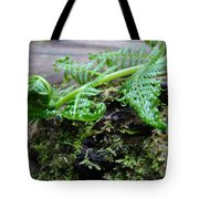 Redwood Tree Forest Fern Art Prints Ferns Giclee Baslee Trouman Tote Bag