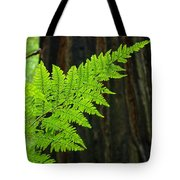 Redwood Tree Forest Ferns Art Prints Giclee Baslee Troutman Tote Bag