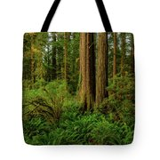 Redwoods And Ferns Tote Bag