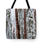 Redwoods In Snow Tote Bag